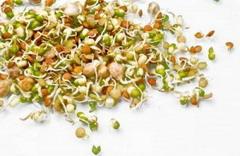 Пророщенные семена опасны для здоровья