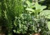 travi v sadu