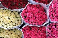 cvetov