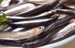anchous1