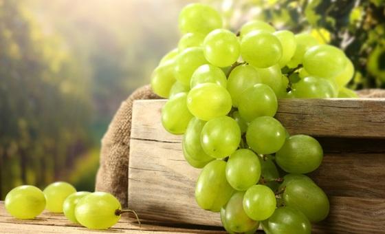 vinograd_vibor2