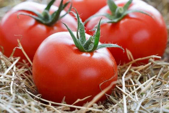 kak_sohranit_pomidory_svegimi_do_ng3