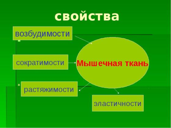 svoystva_mishzi2