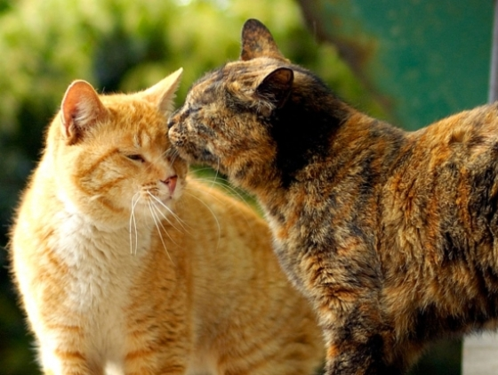 cats_love2