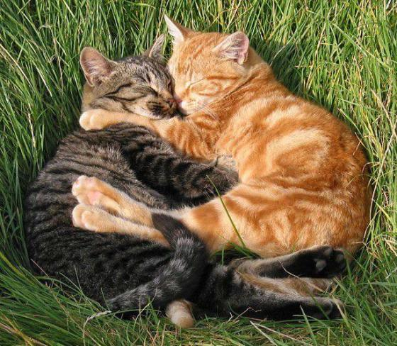 cats_love3
