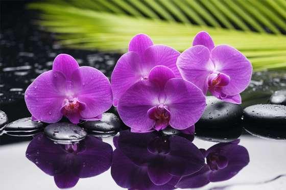 orchids_02