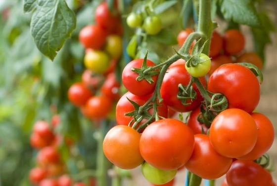 tomat2