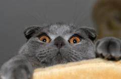 funny-cat1