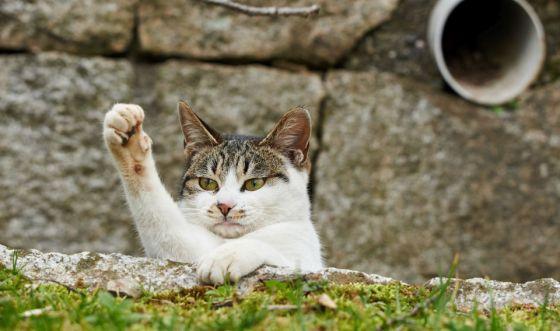 funny-cat2