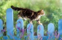 cat-fence-animals-lavender-climbing