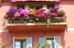cvety-dlya-balkona