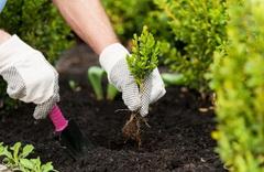 Летние работы в саду - что можно сажать, как ухаживать за растениями